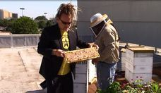 Rescued Bees Flourish on Central Market's Roof