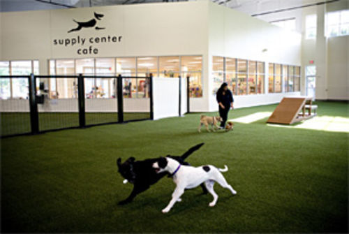 Unleashed, one of the country's first indoor dog parks, has taken the dog park experience to new levels of luxury for dogs and owners alike.