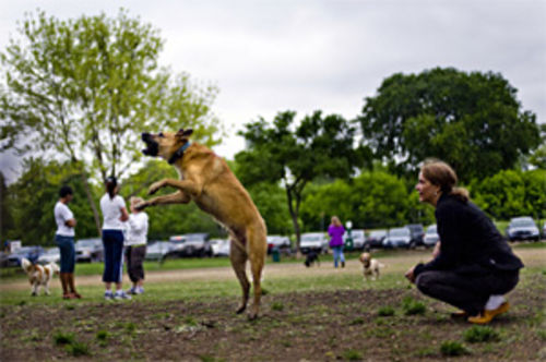 Huckleberry (with owner Carol Pettee) leaps to catch a tennis ball one morning at the big-dog park where dogs who weigh more than 30 pounds can meet and greet other dogs who weigh more than 30 pounds.
