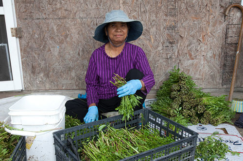 Lay Ut, 67, only recently came to the United States from Cambodia and spends every day hunched and bundling water spinach.