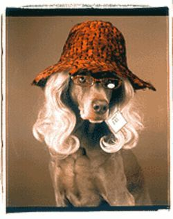 Two Dallas galleries are howling over William Wegman's fashion photos with dogs...