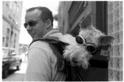 "Gus, the wire fox terrier, wears ""doggles"" downtown."