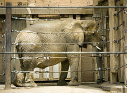 Jenny the elephant will be sent to Africam Safari Park in Puebla, Mexico.