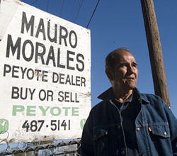 Cactus spines and the occasional rattle snake are all in a day's work for Mauro Morales, one of three legal peyote h