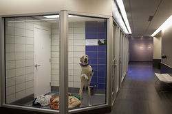 The SPCA opened a new shelter in Dallas last month.