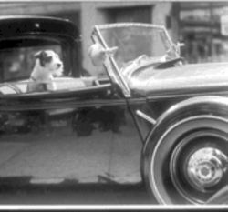 "Harness this: That household hound is just waiting to go for a spin and check out ""The Aristocrat"" by John Albok at the new Mondo Cane  exhibit."