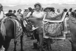 "Seabiscuit would be envious: April Blan Kao's ""The Annual August First Horse Race in Litang, Tibet, 2002"" from Tsashi Dele."