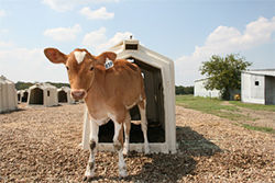 Todd Moore&#039;s Lucky Layla Farms is one of the last dairies in the Dallas area.