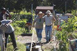 There's a groundswell of support in Dallas for community gardens and neighborhood farmers markets—but City Hall just wants them to go away.