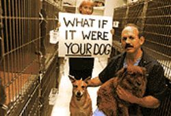 Animal activists Susan Oakey and veterinarian Rick Hamlin, pictured at Hamlin's animal hospital, oppose a research project involving live dogs at UT Southwestern.